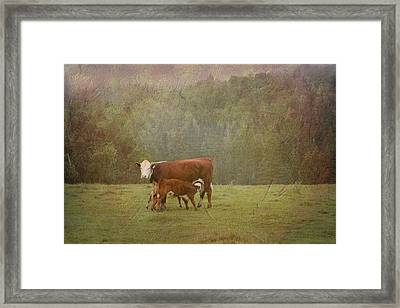 Early Morning Breakfast-cow Style Framed Print