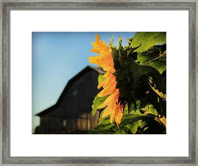Framed Print featuring the photograph Early One Morning by Chris Berry