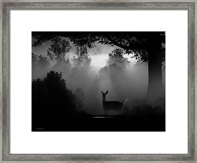 Early Riser Framed Print by Ron Jones
