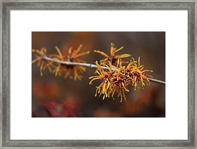 Early Spring Buds Framed Print by Robert Ullmann