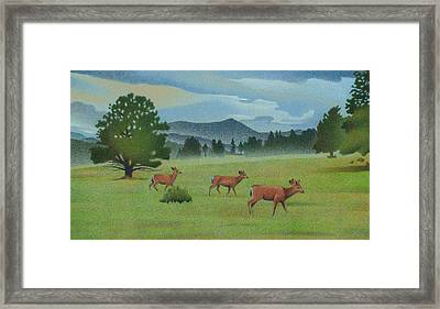 Early Spring Evergreen Framed Print