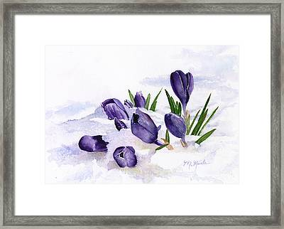 Early Spring In Montana Framed Print