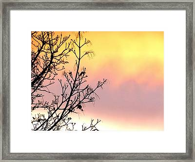 Framed Print featuring the photograph Early Spring Sunset by Will Borden
