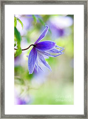 Early Springs Blues Framed Print by Tim Gainey