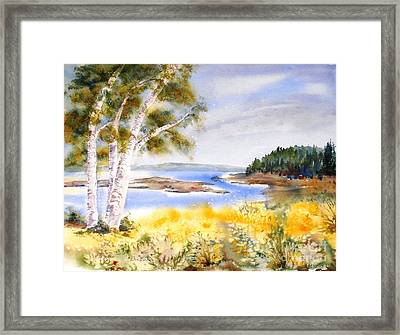 Early Summer Birches Framed Print
