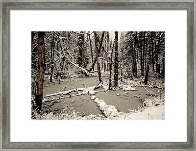 Early Winter Framed Print by Todd Bissonette