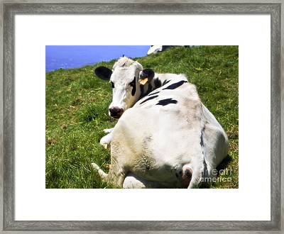 Earmarked Framed Print by Madeline Ellis