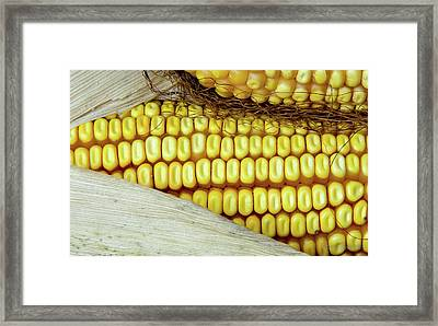 Ears Of Corn #2 Framed Print