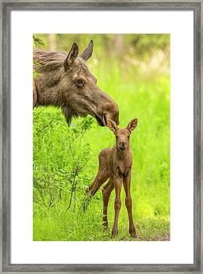 Ears Up Framed Print by Tim Grams