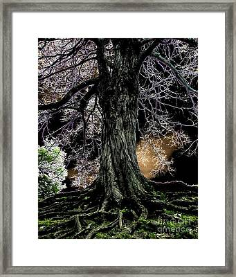 Earth Bound Framed Print