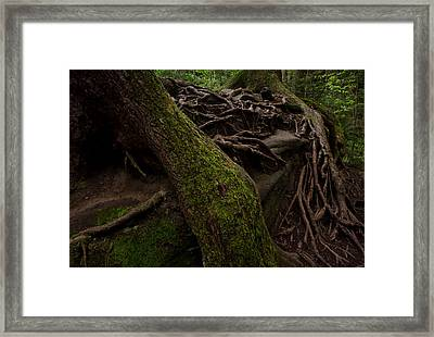Earth Day 2012 Framed Print by Maria Suhr