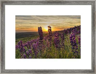 Earth Laughs In Flowers Framed Print by Mark Kiver