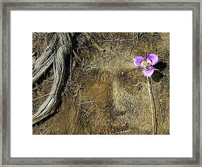 Framed Print featuring the photograph Earth Memories-desert Flower # 1 by Ed Hall