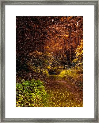 Earth Tones In A Illinois Woods Framed Print by Thomas Woolworth