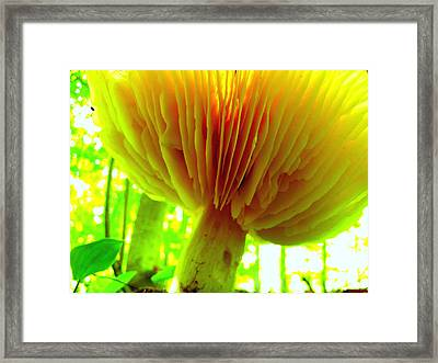 Earth View Framed Print by Shirley Sirois