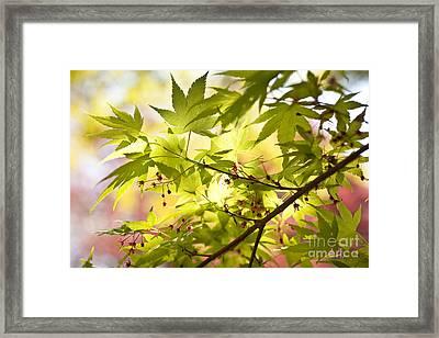 Earth Walk Framed Print by Susan Cole Kelly