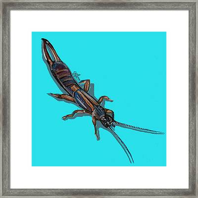 Framed Print featuring the painting Earwig by Jude Labuszewski