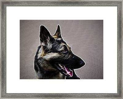 East European Shepherd Or German Shepherd Framed Print by Alexey Bazhan