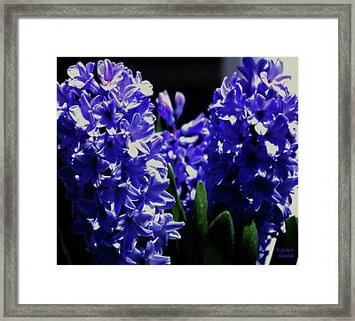 Easter Blues Framed Print