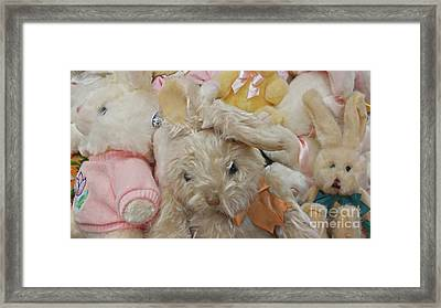 Framed Print featuring the photograph Easter Bunnies by Benanne Stiens