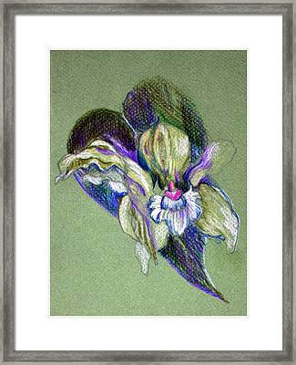 Easter Corsage Framed Print by Mindy Newman