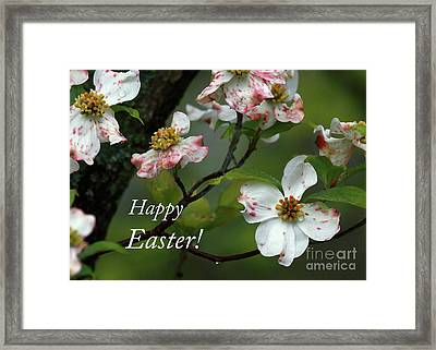 Framed Print featuring the photograph Easter Dogwood by Douglas Stucky