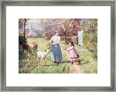Easter Eggs In The Country Framed Print