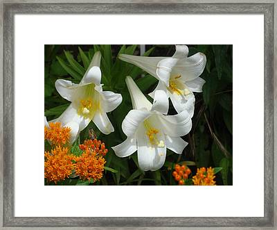 Easter Lilies And Butterfly Weed Framed Print