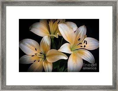 Easter Lilies  Framed Print by Deborah Klubertanz
