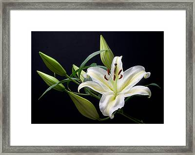 Easter Lily 3 Framed Print