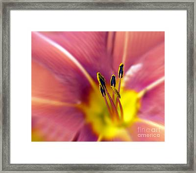 Easter Lily 3 Framed Print by Tony Cordoza