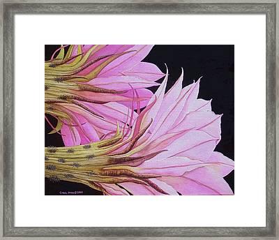 Easter Lily Cactus Flower Framed Print by Carol Sabo