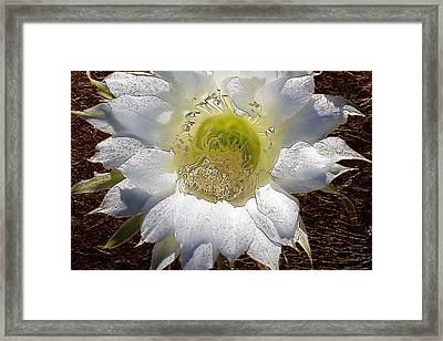 Easter Lily Cactus With Gold Leaf Look Framed Print by Phyllis Denton
