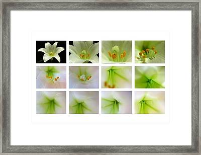 Easter Lily Greetings Framed Print by Juergen Roth