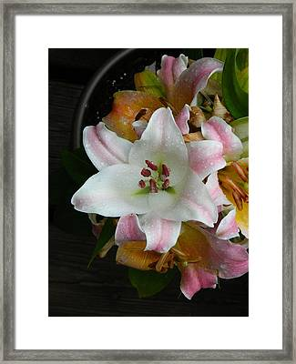 Easter Lily Framed Print by Robert Moore