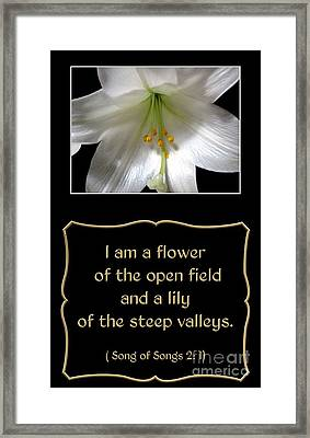 Easter Lily With Song Of Songs Quote Framed Print