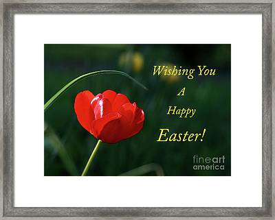 Framed Print featuring the photograph Easter Tulip by Douglas Stucky