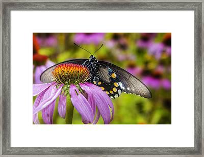 Framed Print featuring the photograph Eastern Black Swallowtail Butterfly by Ken Barrett