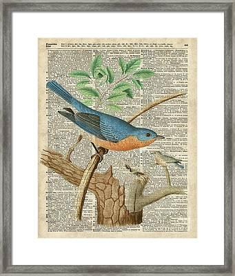 Eastern Blue Birds Framed Print