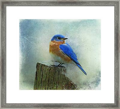 Eastern Bluebird II Framed Print by Sandy Keeton