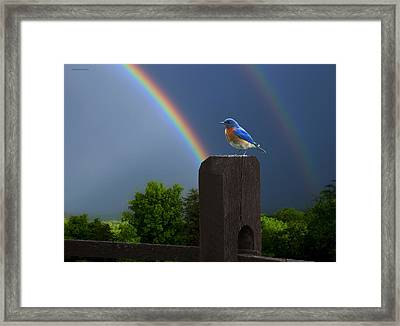 Eastern Bluebird Framed Print by Ron Jones