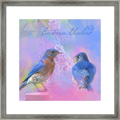 Eastern Bluebirds Watercolor Photo Framed Print by Heidi Hermes
