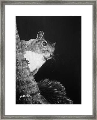 Eastern Gray Squirrel Framed Print
