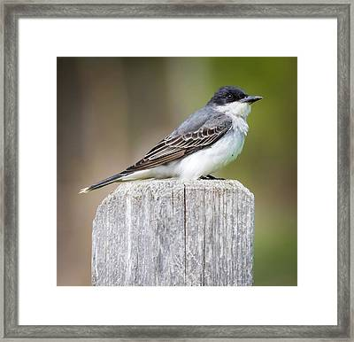 Framed Print featuring the photograph Eastern Kingbird 2018 by Ricky L Jones