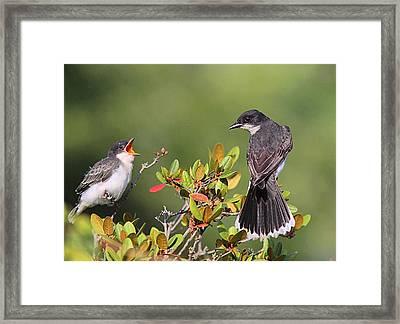 Eastern Kingbird And Fledgling Framed Print by Linda Crockett
