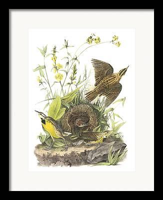 Meadowlark Paintings Framed Prints