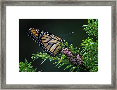 Framed Print featuring the photograph Eastern Monarch by Juergen Roth
