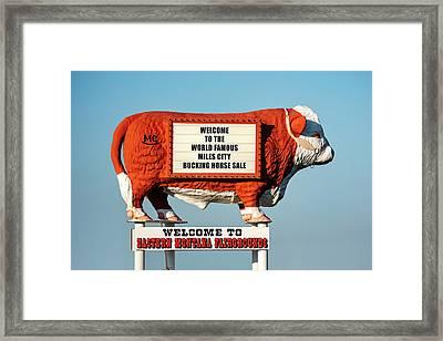 Eastern Montana Fairgrounds Cow Framed Print by Todd Klassy
