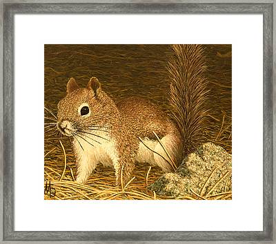 Eastern Pine Squirrel Framed Print