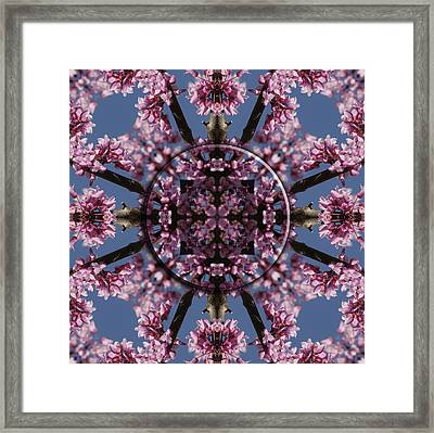 Eastern Red Bud Mandala Framed Print by Alan Skonieczny